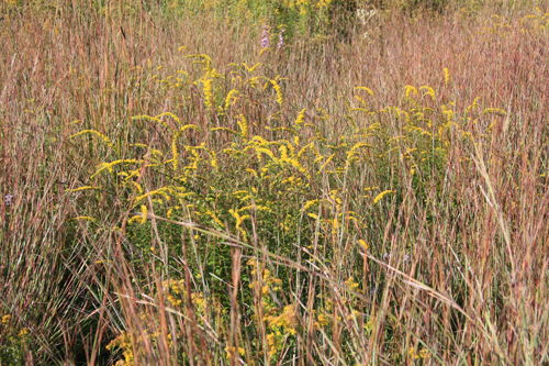 Education_Article_NativePerennials-03