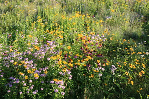 Wildflower Meadows Let S Get Real Larry Weaner Landscape Associates