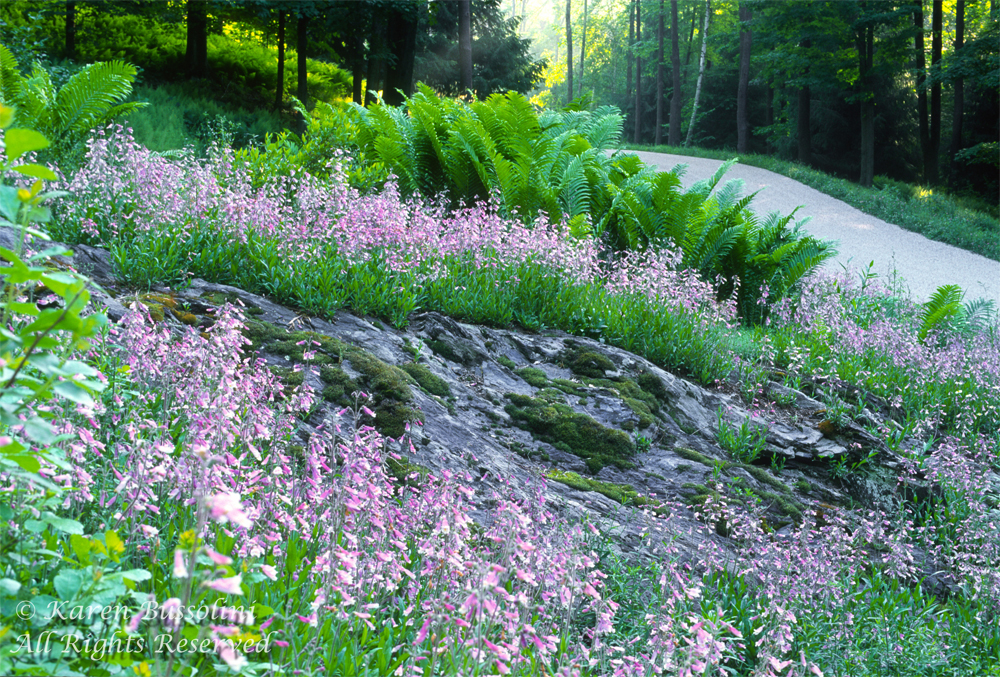For Larry Weaner Landscape Design website only