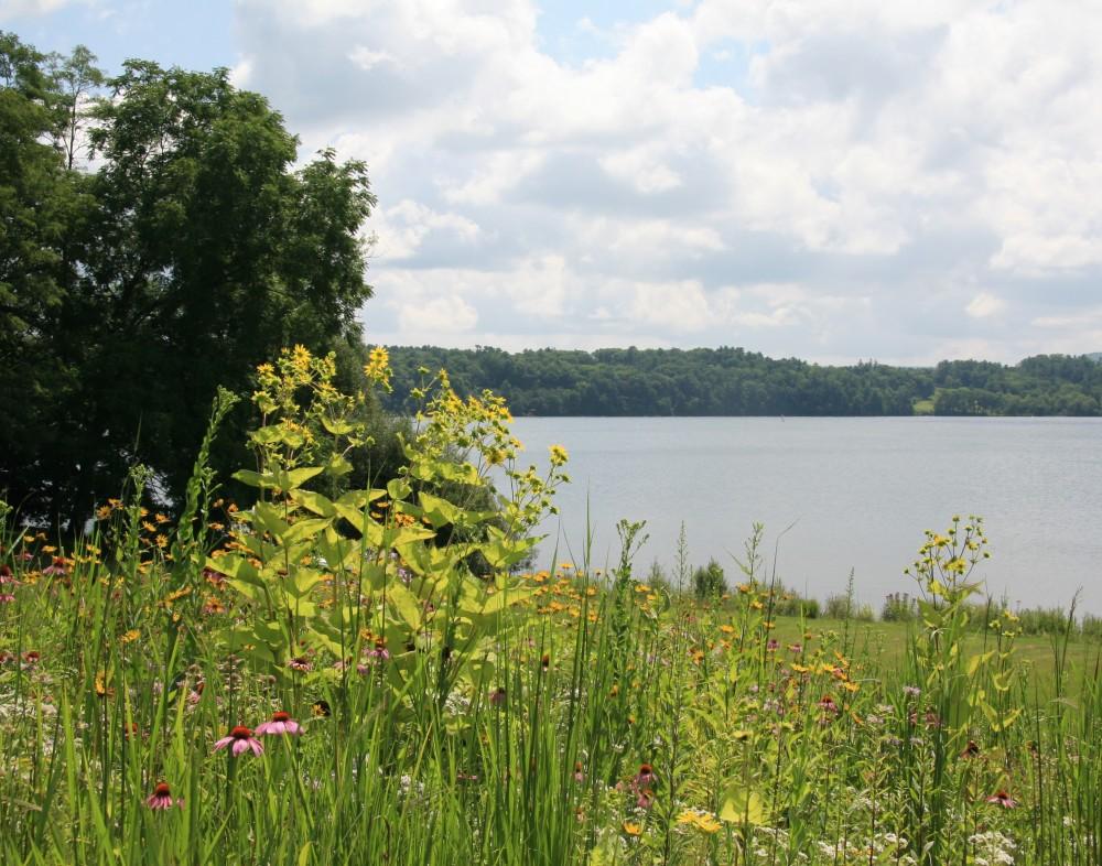 LWLA_Meadow_LakevilleCT_01