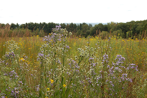 News_LWLA native meadow