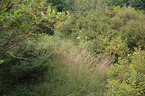 Aton Forest2_2012-09